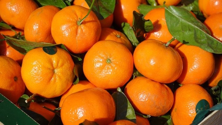 Вначале зимы Турция поставила вКрым 3,5 тыс. тонн фруктов