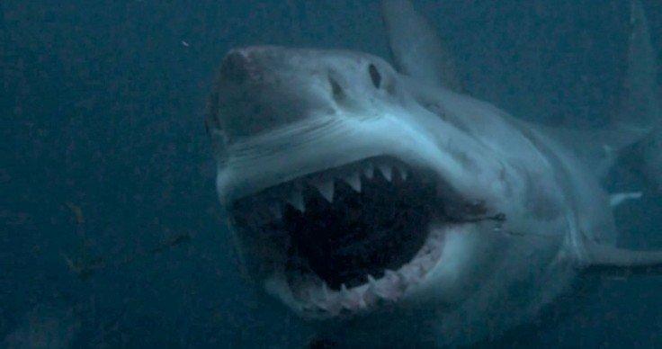 Скопелос— рыболовы выловили 7-метровую акулу!