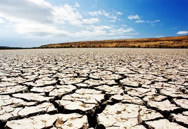 Засуха может отнять Крым урожая озимых